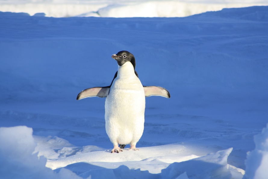 penguin-funny-blue-water-86405-large