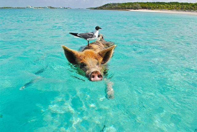 Top Tourism Keywords for the Bahamas, 2018