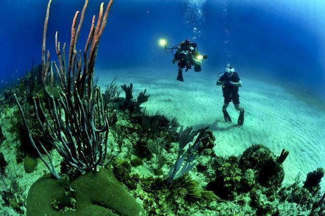 Website design for the Scuba Diving Industry, Bahamas