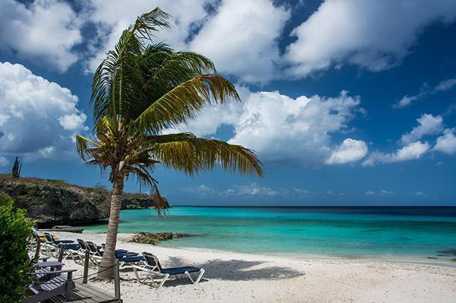 Curacao Web Design